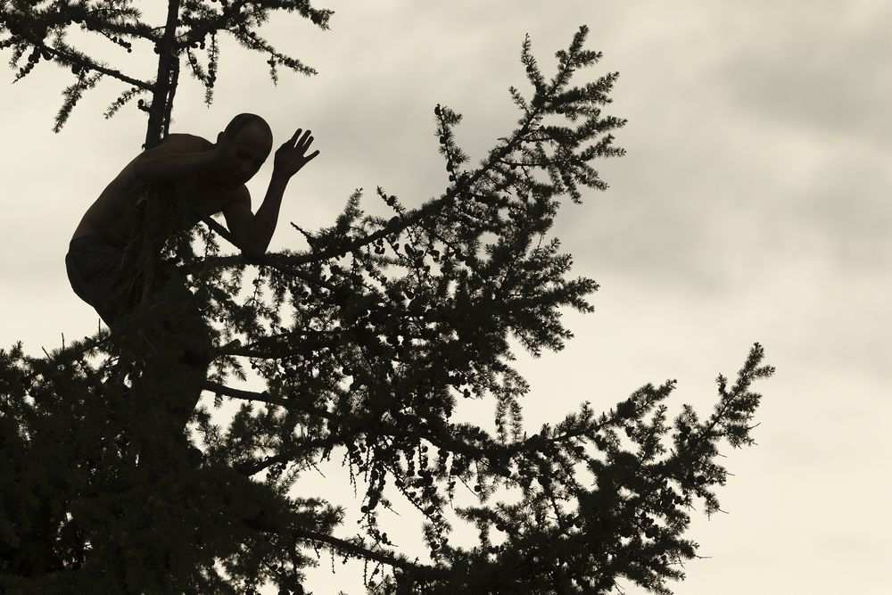 TREED MAN RESCUED BY EDMONTON POLICE AND FIRE