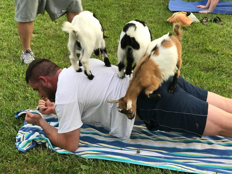 Goat Yoga Classes Happening This Week At K Days 840 Cfcw Am