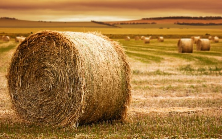 COULD ALBERTA BE IN FOR A HAY SHORTAGE AGAIN?