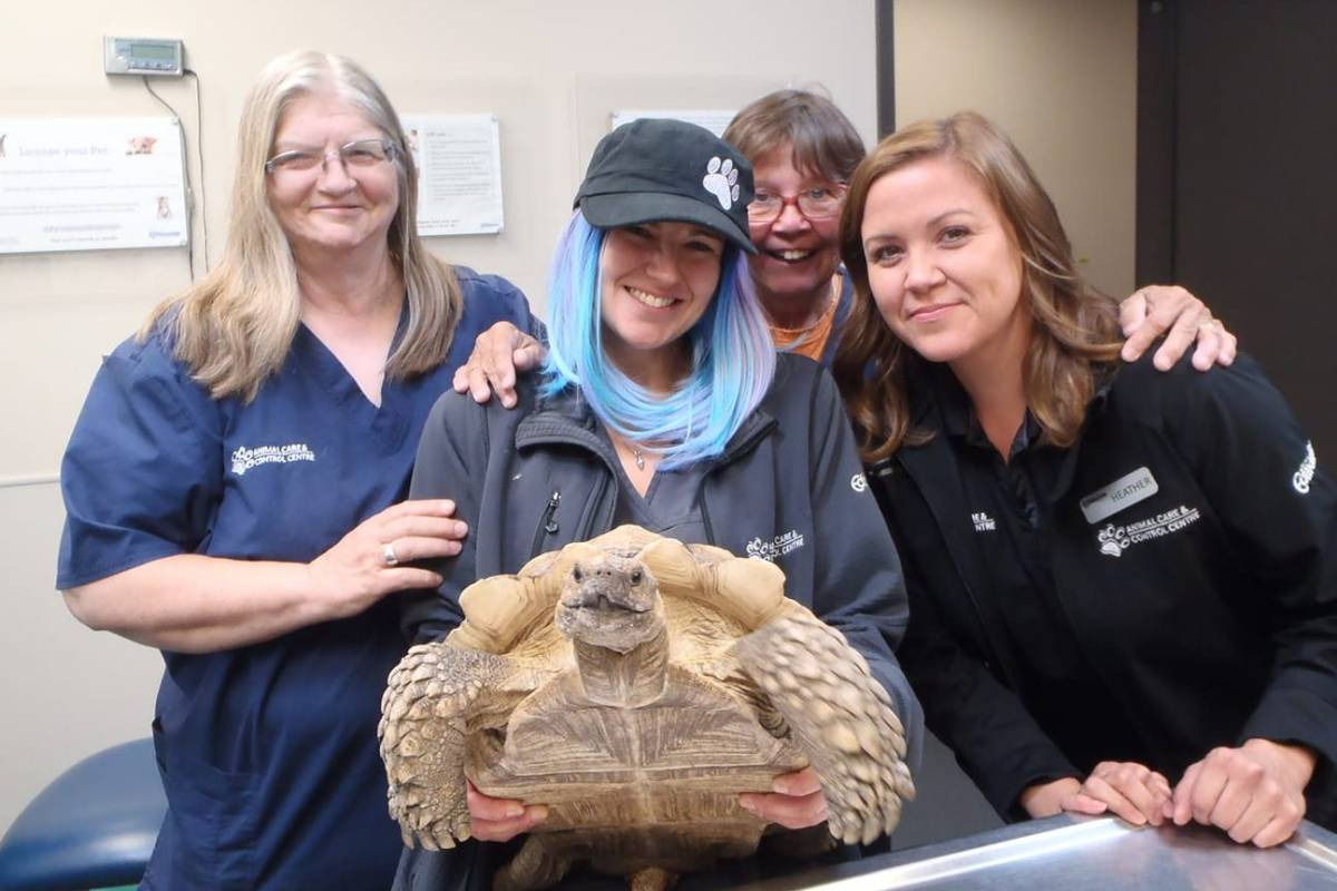 """FEW MORE DAYS BEFORE """"TORTY"""" IS REUNITED WITH HIS OWNER"""