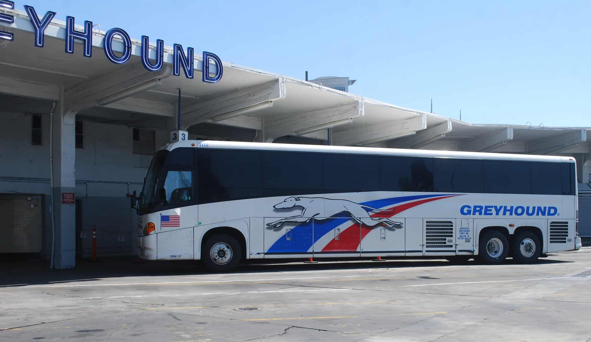 GREYHOUND GONE THIS FALL