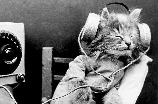 DOES YOUR CAT NEED THE SOOTHING SOUNDS OF CAT CALM RADIO?