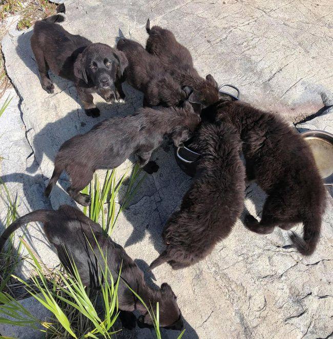 PUPPIES FOUND ON REMOTE MANITOBA ISLAND--NAMED AFTER GILLIGAN'S ISLAND CASTAWAYS