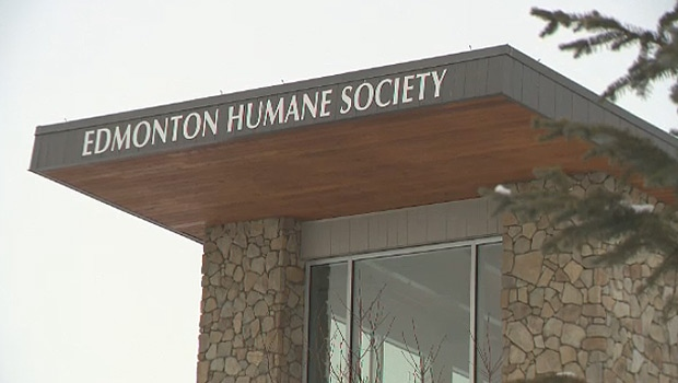 HUMANE SOCIETY EMPLOYEE CHARGED IN FORGOTTEN CATS CASE