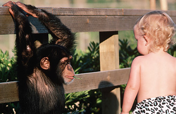 "SCIENTISTS HAVE CONFIRMED THAT KIDS ARE ""TINY APES"""