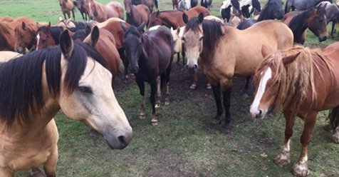ADORADO NINO HORSE RESCUE AND SANCTUARY NEEDS HAY FOR THE WINTER