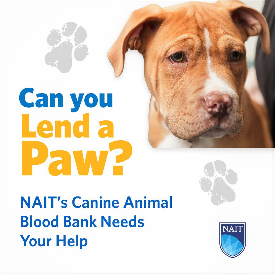 NAIT'S DOG BLOOD DONOR CLINIC LOOKING TO EXPAND