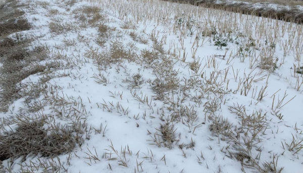 FARM GROUPS URGING THE PROVINCE TO HELP PRODUCERS WHO HAVEN'T BEEN ABLE TO GET THEIR CROPS OFF YET