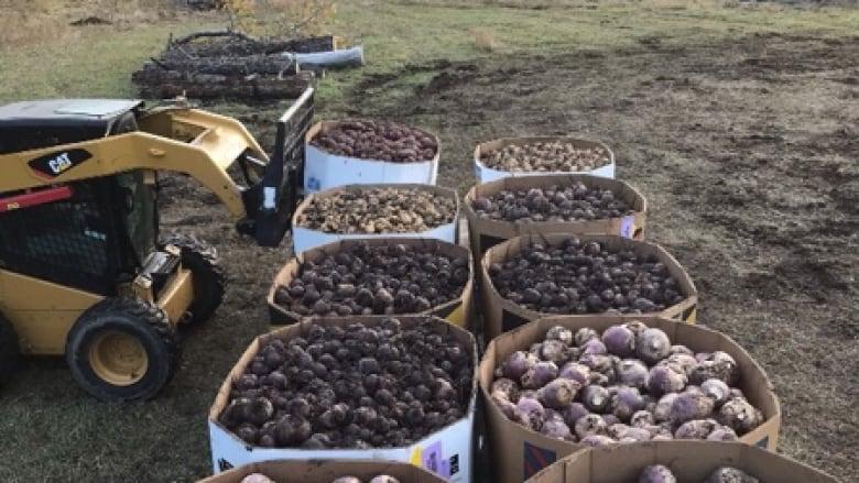 PIGEON LAKE AREA FARMER MAKES HUGE DONATION TO THE EDMONTON AND CALGARY FOOD BANKS