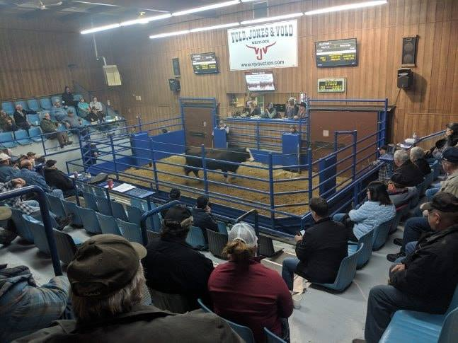 """CFCW'S """"CALVES FOR CANCER"""" RAISES MORE THAN 168-THOUSAND DOLLARS FOR THE CROSS CANCER INSTITUTE"""