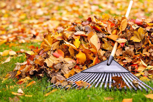 NOT RAKING UP THOSE LEAVES---IS A GOOD THING!