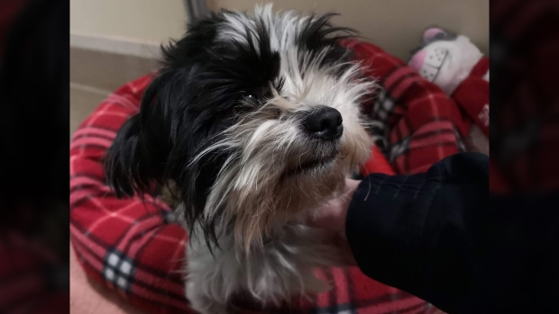 DOG STUFFED INTO GARBAGE BAG IN A BOX AND DUMPED IN THE PARKING LOT OF THE NORTHWEST EDMONTON COSTCO