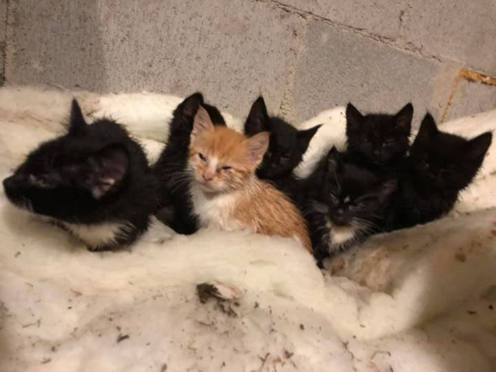 MORE THAN A DOZEN CATS AND KITTENS FOUND DUCT TAPED INTO RUBBERMAID CONTAINERS