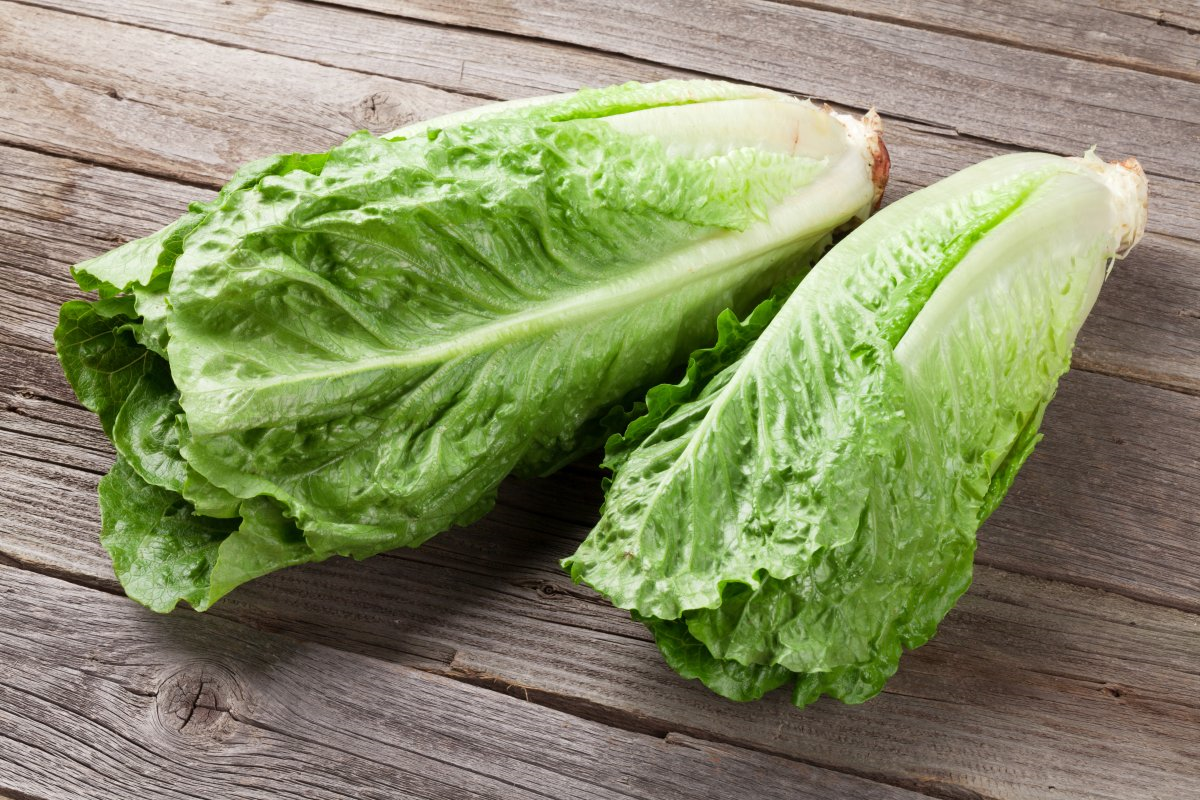 ROMAINE WARNING