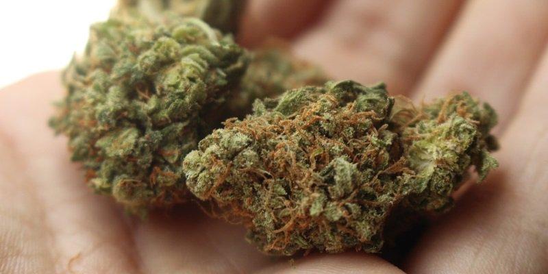 Local Cannabis Retailer is niet verrast door ontslag van Canopy CEO
