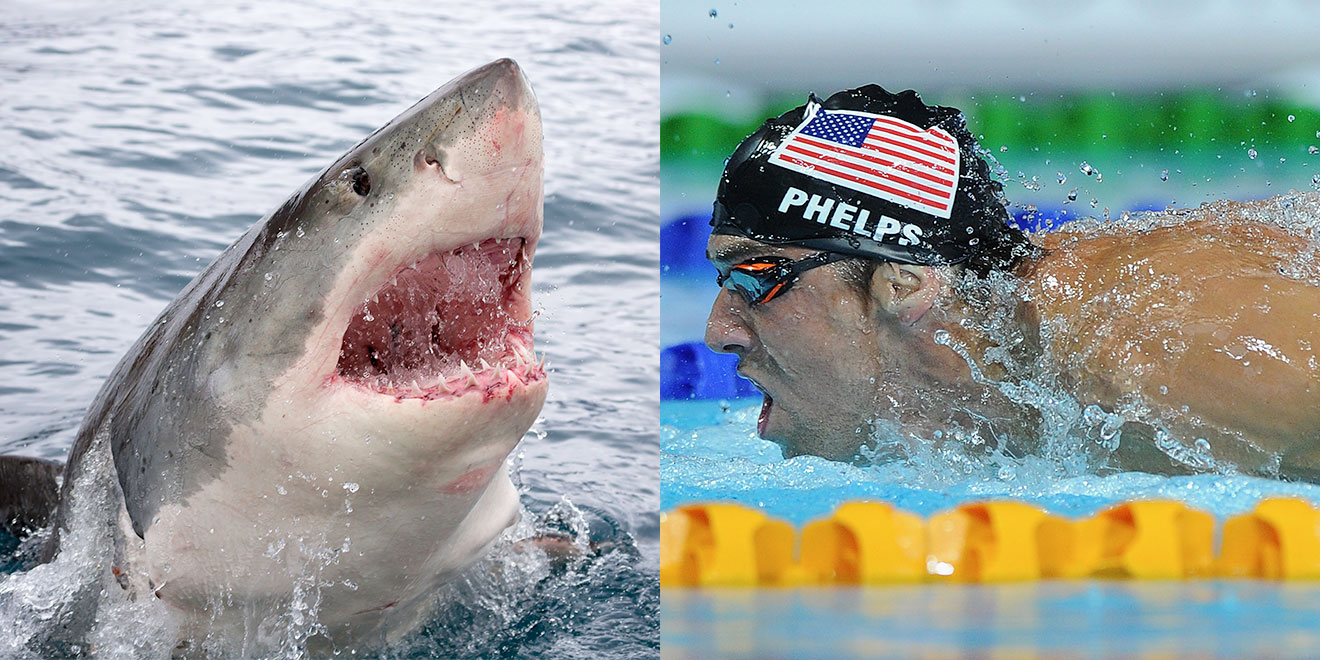 Michael Phelps Will Race A Great White To Kick Off Shark Week