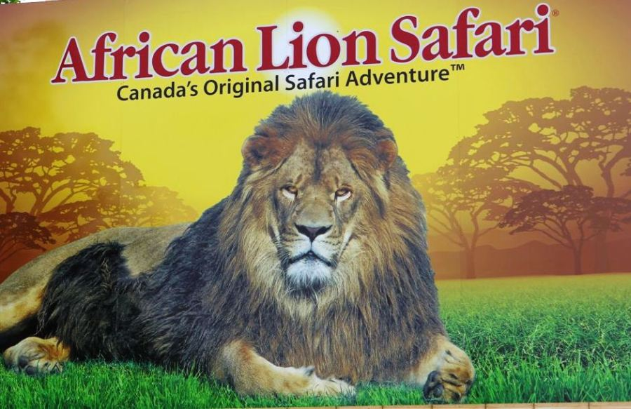 boombox Lunch – Win a VIP Family Package to African Lion Safari