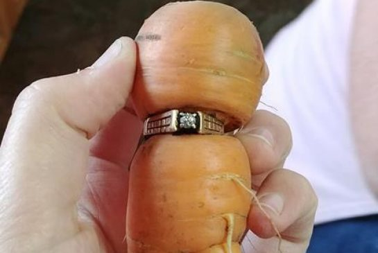 Political Whirlpool, Ring Carrot, M