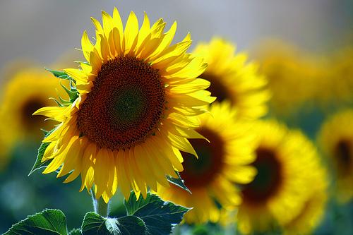 Political Whirlpool, Sunflower Selfies, Mobile Passports