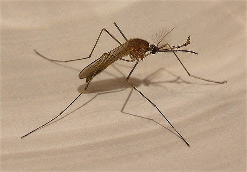 Craig MacAulay, Fraud Cell Phone Calls, Mosquitoes force Surrender